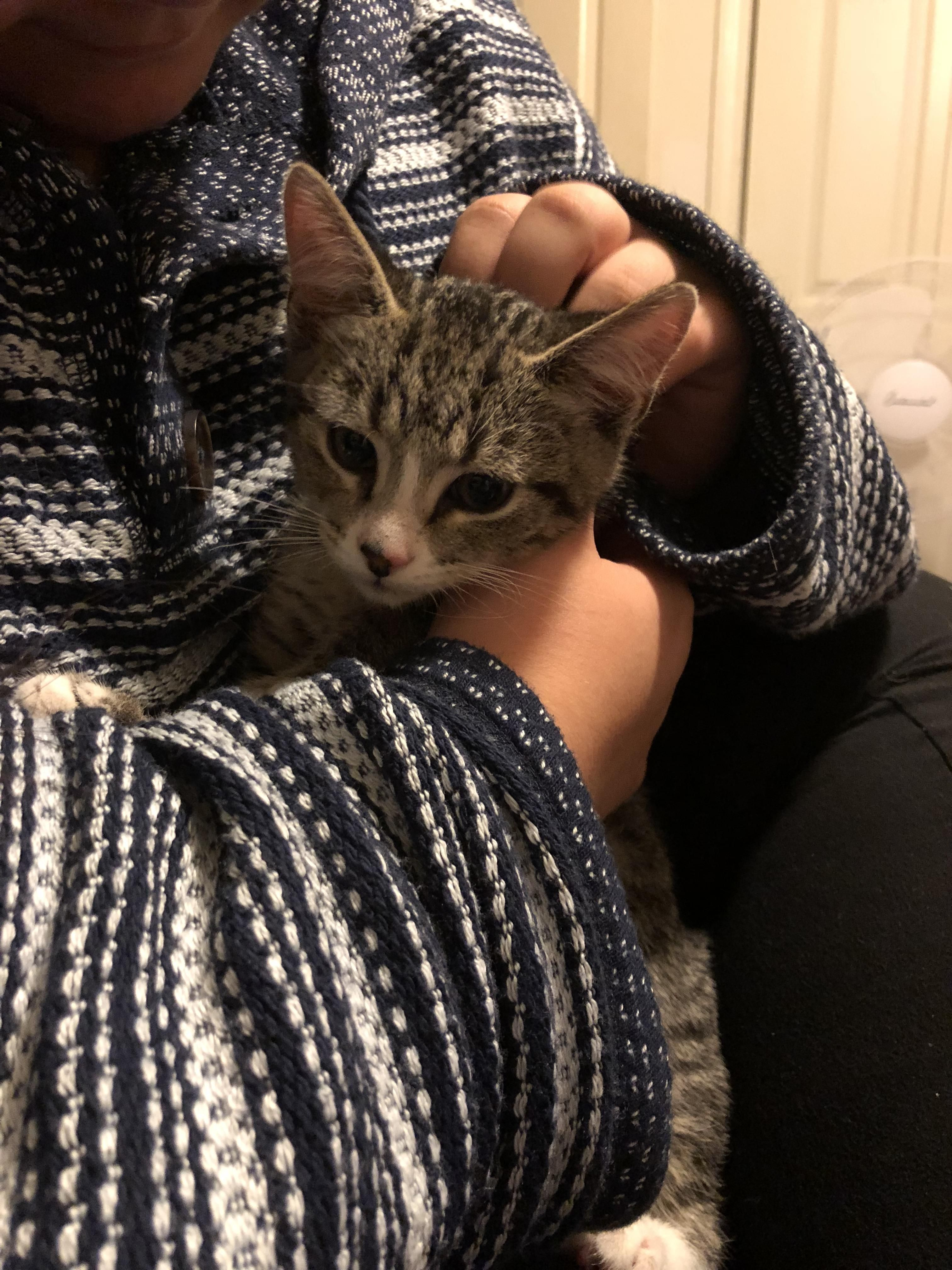Cat Cats Catlover Kitty Kitties Meow Me As A Girlfriend Kitten 3 Month Olds