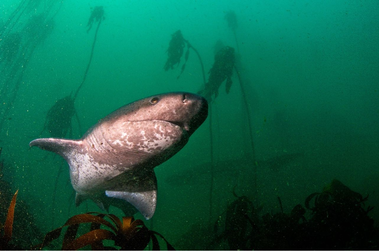 Pin by Josette E. on under & over water Shark photos