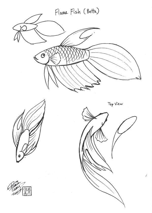 Flame Fish Fish Drawings Animal Drawings Drawings