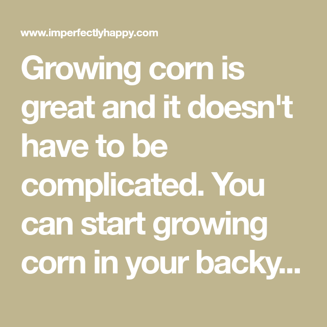 Growing Corn - Everything You Need to Know for Success ...
