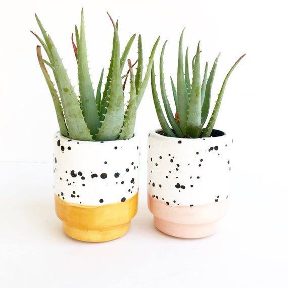 Photo of Ink Spot Pots Ceramic Succulent Planters