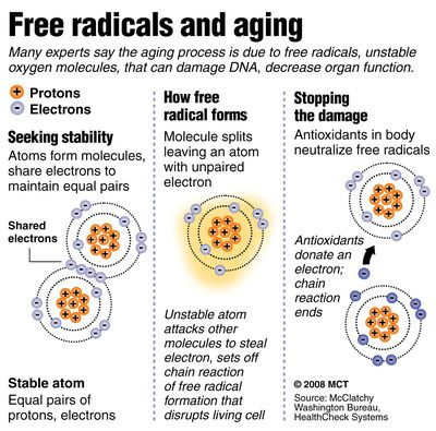 Free Radicals Also Damage Our Largest Organ Our Skin Learn How You Can Do Something About This Www Mylifevantage Com Free Radicals Protandim Aging Process