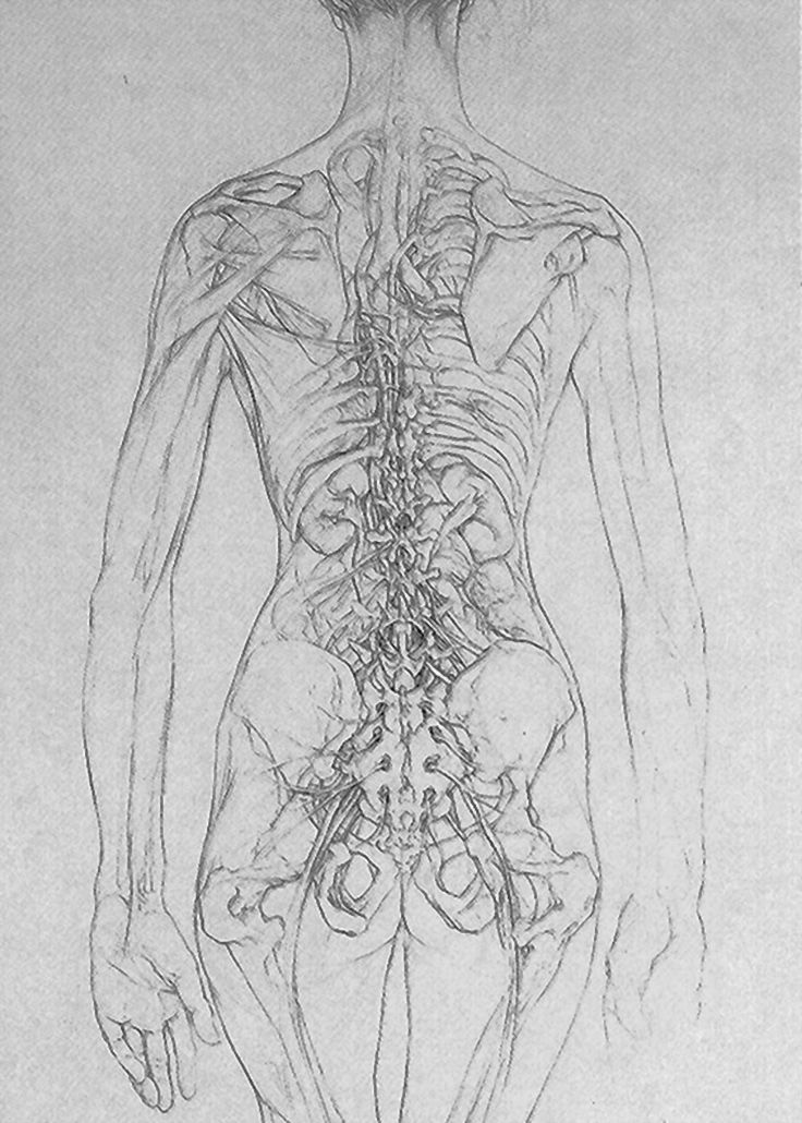 Vena Cavas By Sarah Simblet B 1972 Anatomy Pinterest