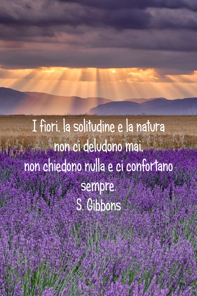 fiori, solitudine, delusione. Quote by Stella Gibbons. Credits GB