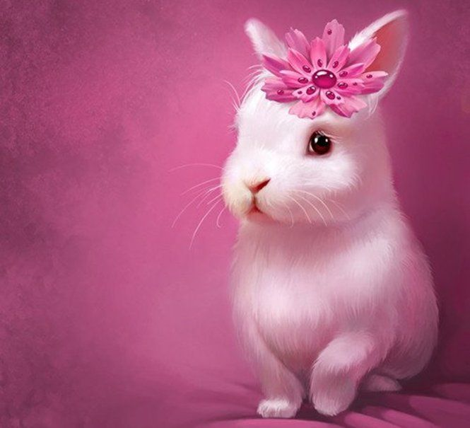 cute rabbit exterior cute