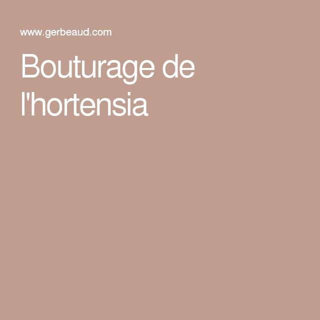 bouturage de l 39 hortensia bouturage pinterest hortensia boutures et arbuste. Black Bedroom Furniture Sets. Home Design Ideas