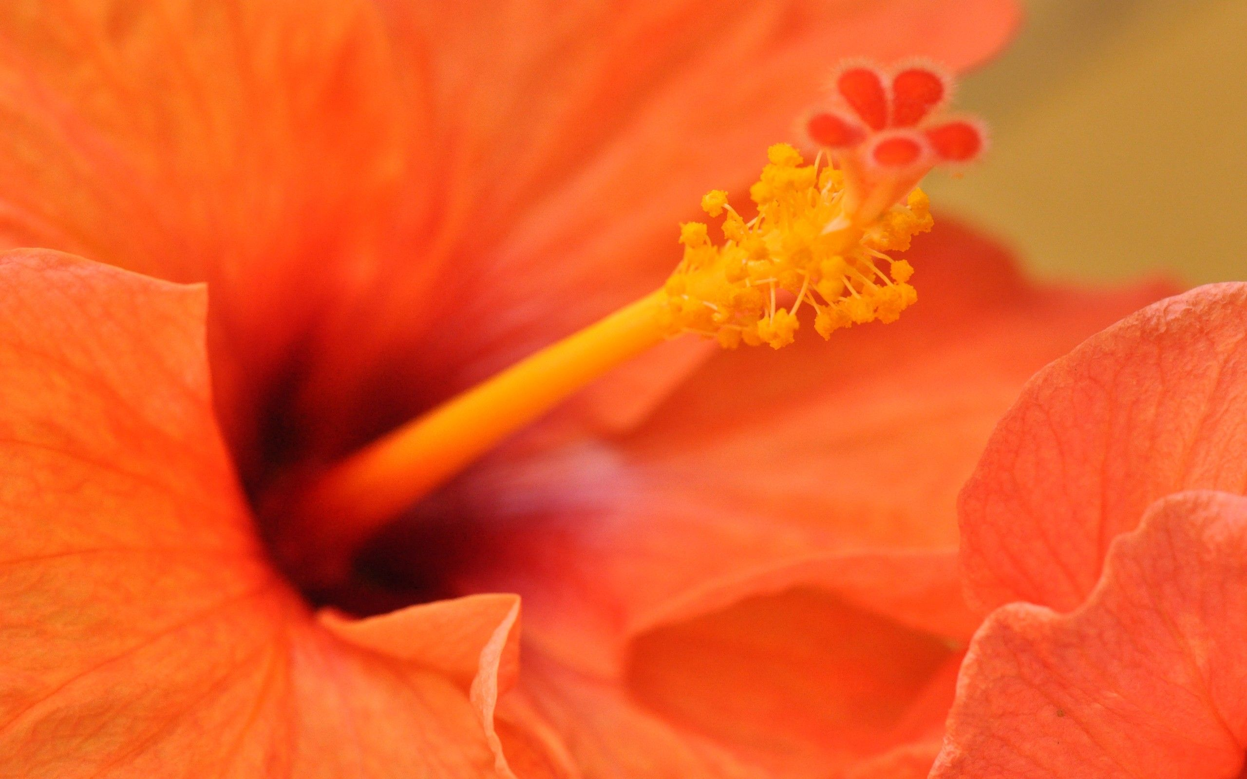 Wallpapers Of Flowers And Love Free Download Hibiscus Flower Wallpaper Hibiscus Flowers