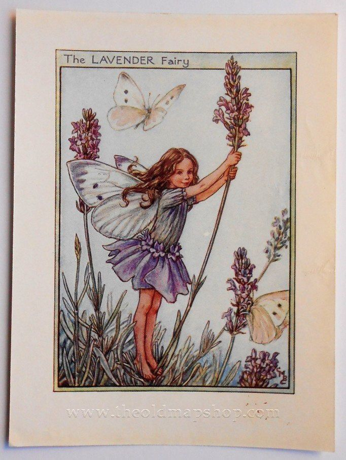 Lavender Flower Fairy Vintage Print C 1950 Cicely Mary Barker Book Plate Illustration By Theoldmapshop On Etsy Fairy Art Vintage Fairies Flower Fairies