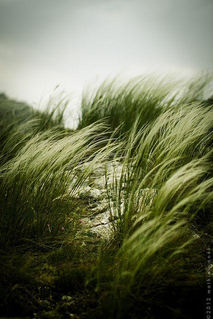 Foret De Saou Green Nature Landscape Nature