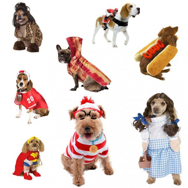 Still can't get over these dog Halloween (dog-o-ween?) costumes.