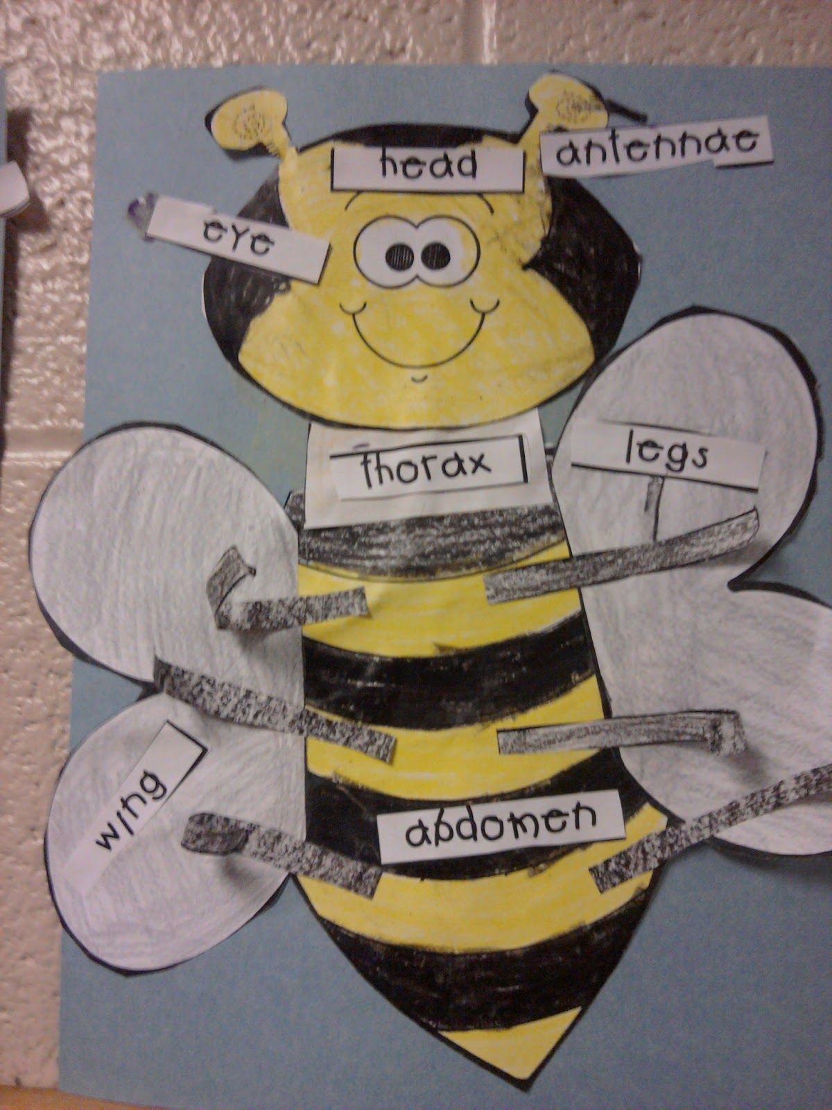 identifying the parts of an insect   SPRING classroom   Insect