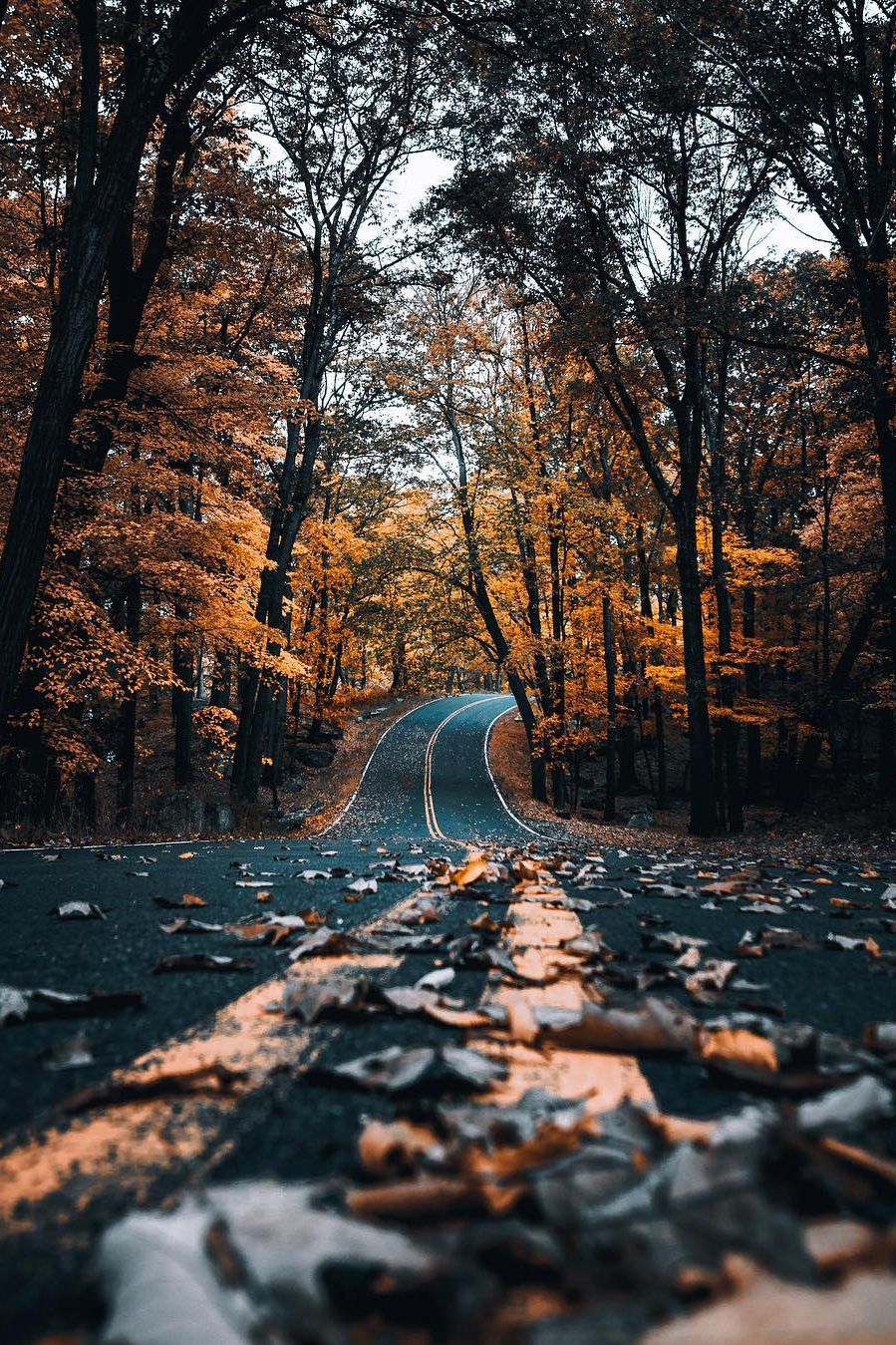 Autumn Cozy : Photo | Open roads | Landscape Photography ...