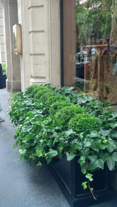 Boxwood and ivy simple low maintenance and always for Low maintenance planter ideas
