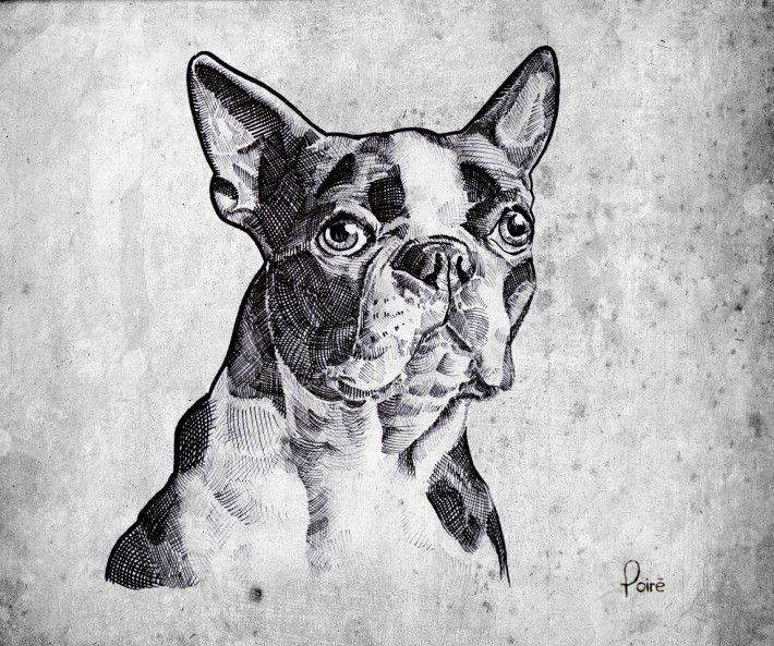 Autor: Christian Poiré En el dibujo apreciamos un bulldog francés dibujado con estilografo donde apreciamos a través de las sombras las arrugas y formas del animal. Esta imagen me encanta es mi animal favorito y de hecho tengo un tatuaje de un bulldog francés en mi cuerpo.