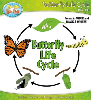 Get Your Students Ready For Science With This Butterfly Life Cycle Clip Art These Would Be A Great Addition To Any M Butterfly Life Cycle Life Cycles Clip Art