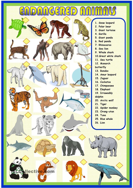 Endangered Animals Matching Endangered Animals Activities Endangered Animals Endangered Animals List
