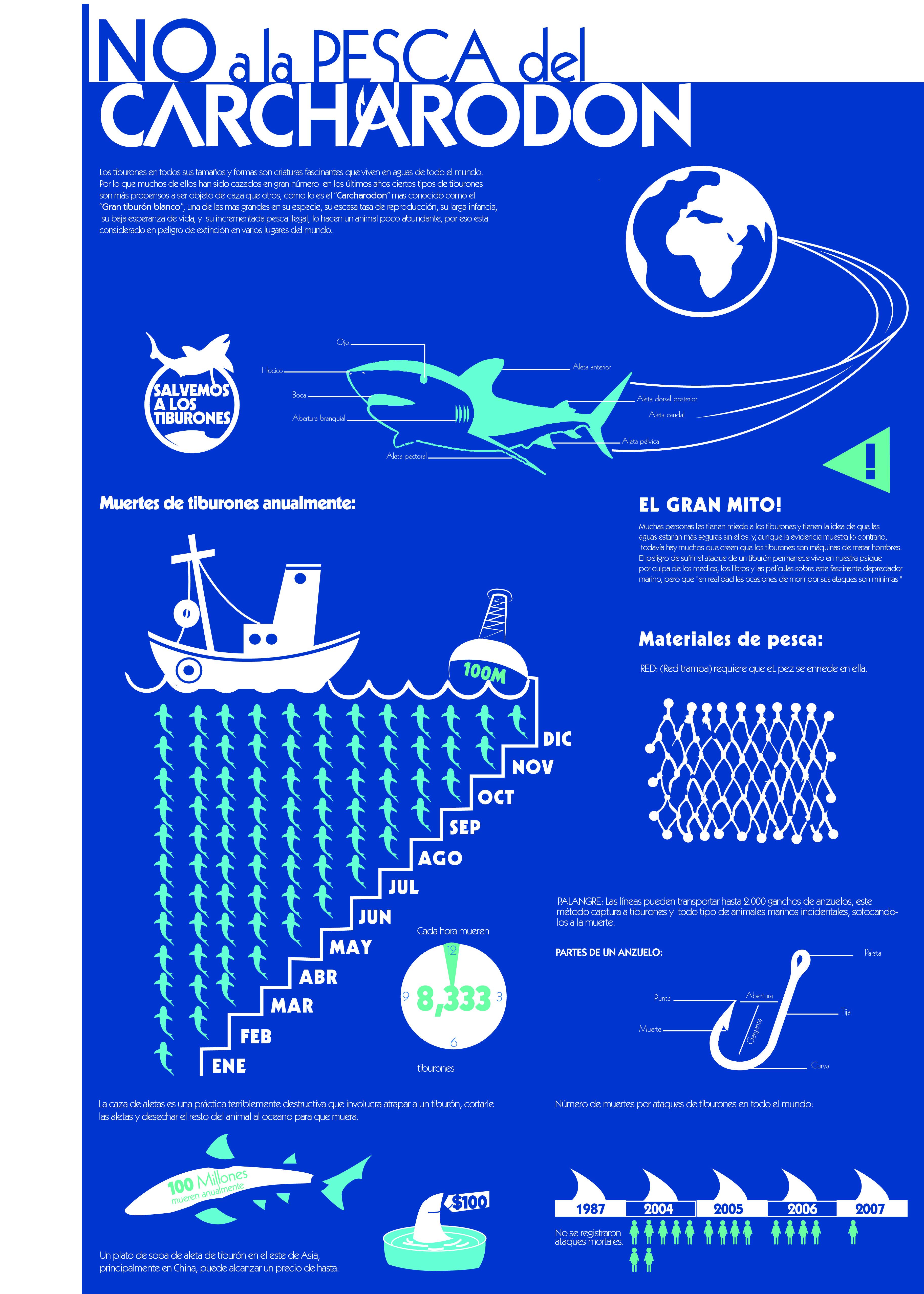 #Infografia #Shark #NoALaPescaDelCacharodon