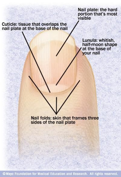 Nails: How to Keep Your Fingernails Healthy and Strong | Fingernails ...