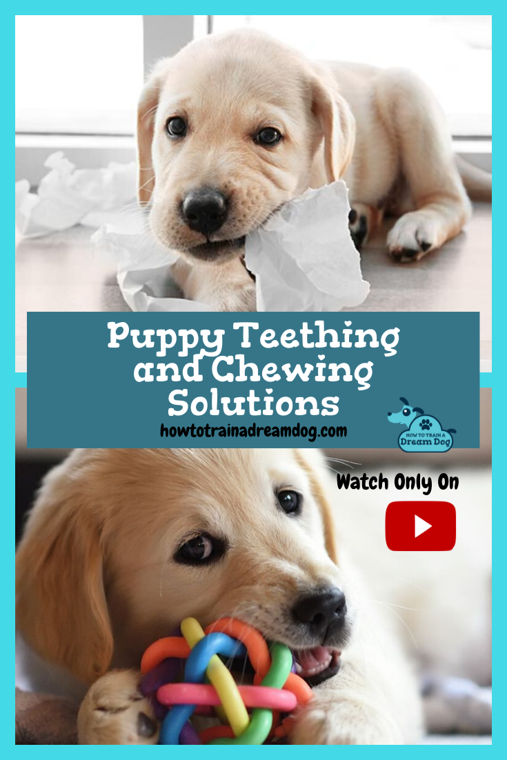 Puppy Teething And Chewing Solutions In 2020 Puppy Teething
