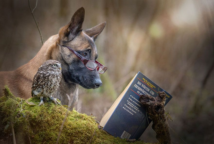 The Unlikely Friendship Of A Dog And An Owl Owl Friendship And Dog - Owlet kitten meet coffee shop become best friends