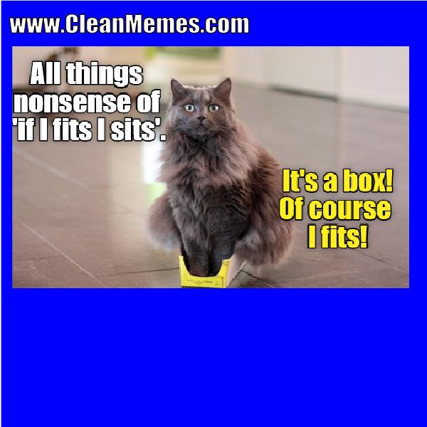 Image result for cat memes clean Cat memes, Cat memes