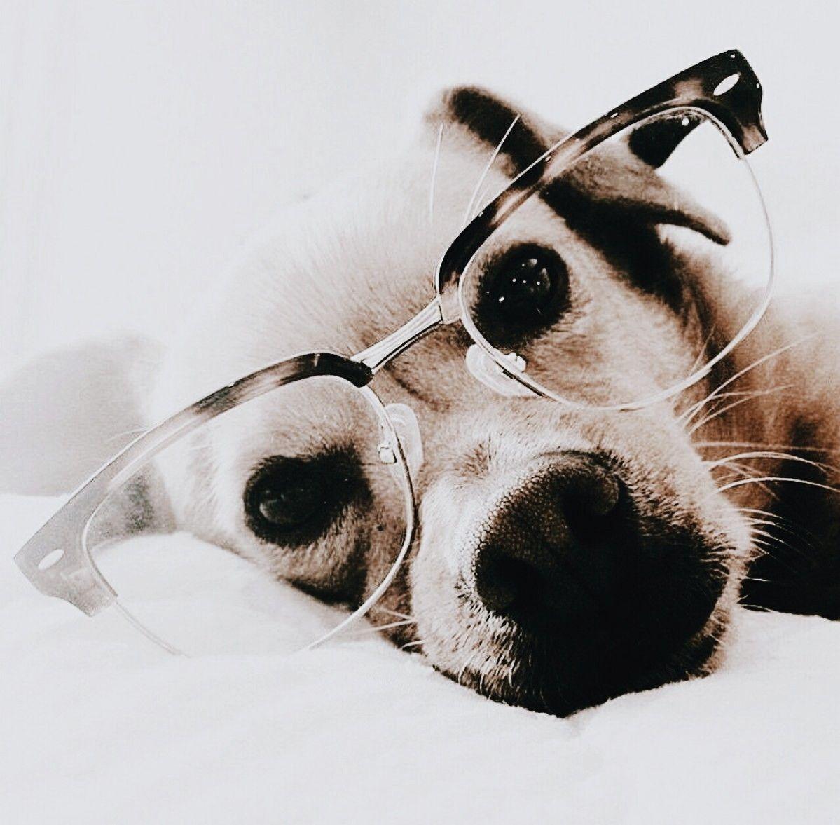 Pinterest A U L I N Cute Animals Dog Love Animals Beautiful
