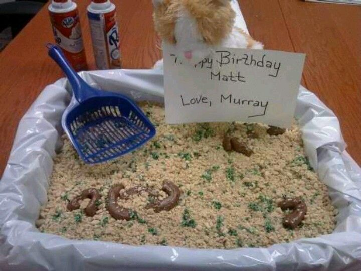 litter box cake kitty litter box cake random litter box 5556