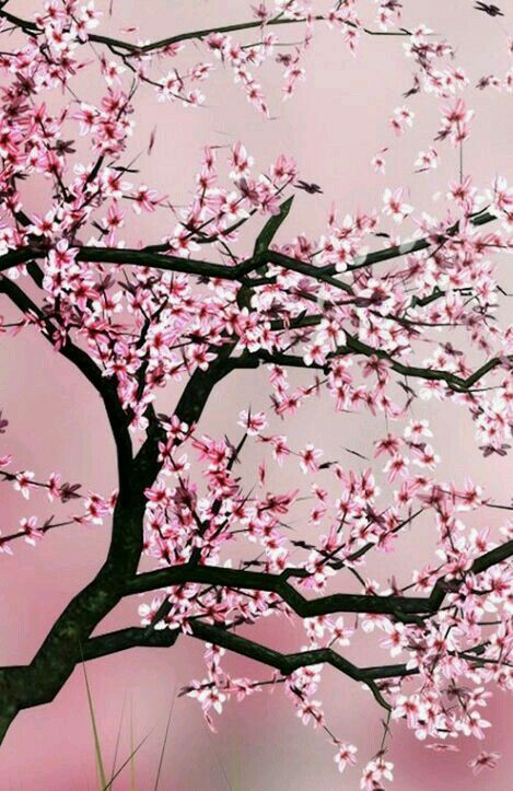 Cherry Blossom Tree Background Http Wallpapersko Com Cherry Blossom Tree Background Html In 2020 Cherry Blossom Background Cherry Blossom Wallpaper Blossom Trees