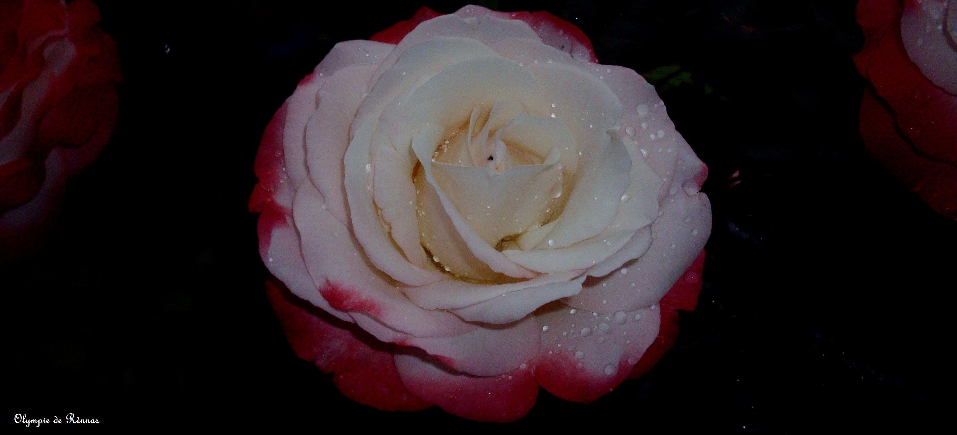 be0d48aa45af7909c02df2a6ac63987e Luxe De Fleurs De Jardin Des Idées