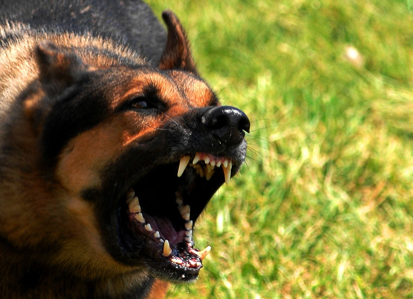 Is your dog aggressive?