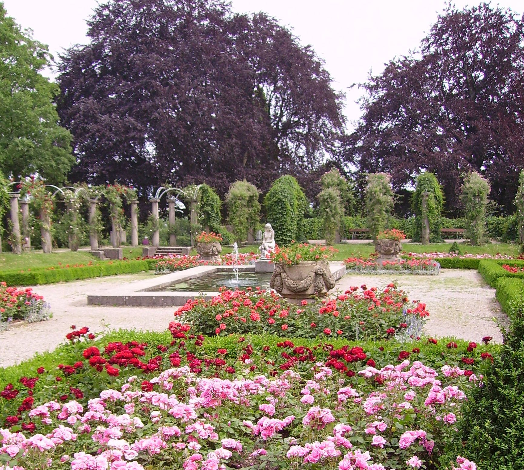 Rosen vor dem Schloss Rosenstein in Rosensteinpark