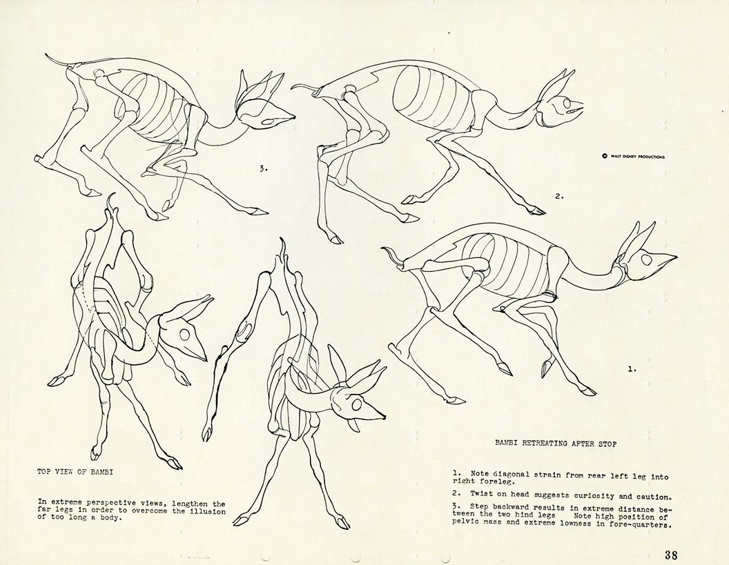 Skeletal Guidebook From Bambi By Rico Lebrun Part 4 Of 5