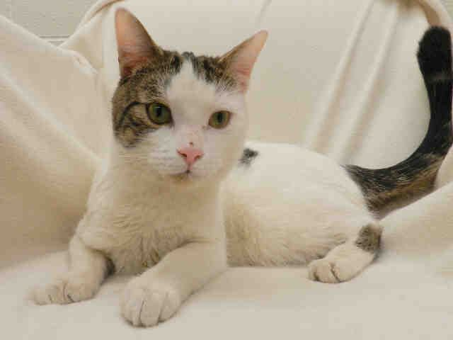 Pedro Available At Petsmart 835 Eglinton Ave East Cat Adoption Animal Shelter Cat Meeting