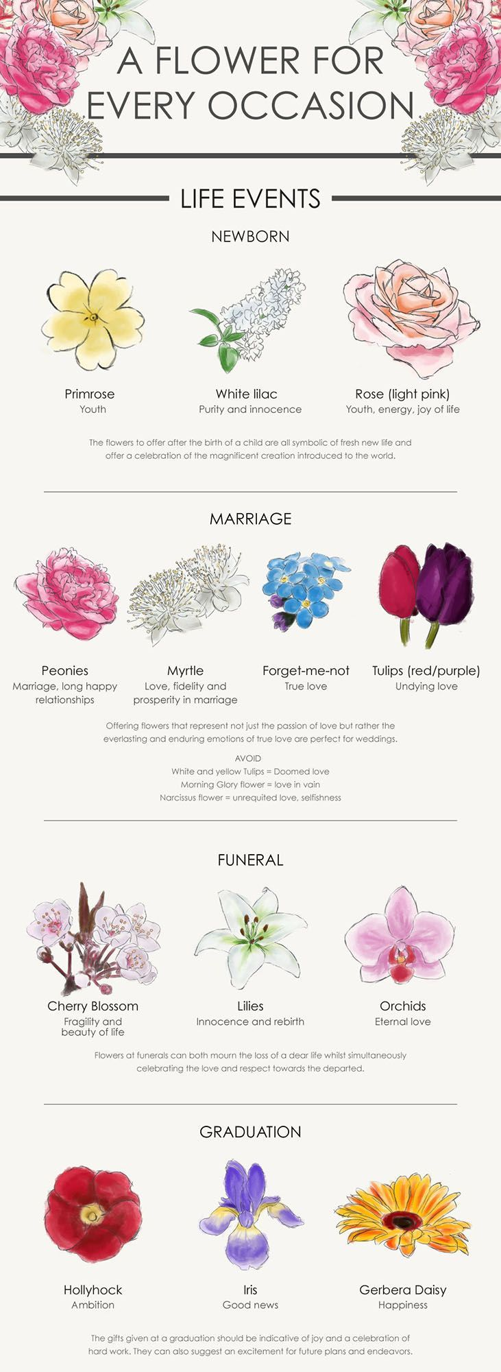 A Flower For Every Occasion Your Complete Guide In 2020 Flower Meanings Trendy Flowers Language Of Flowers