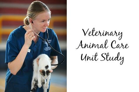 Veterinary Animal Care Unit Study With Images Study Unit