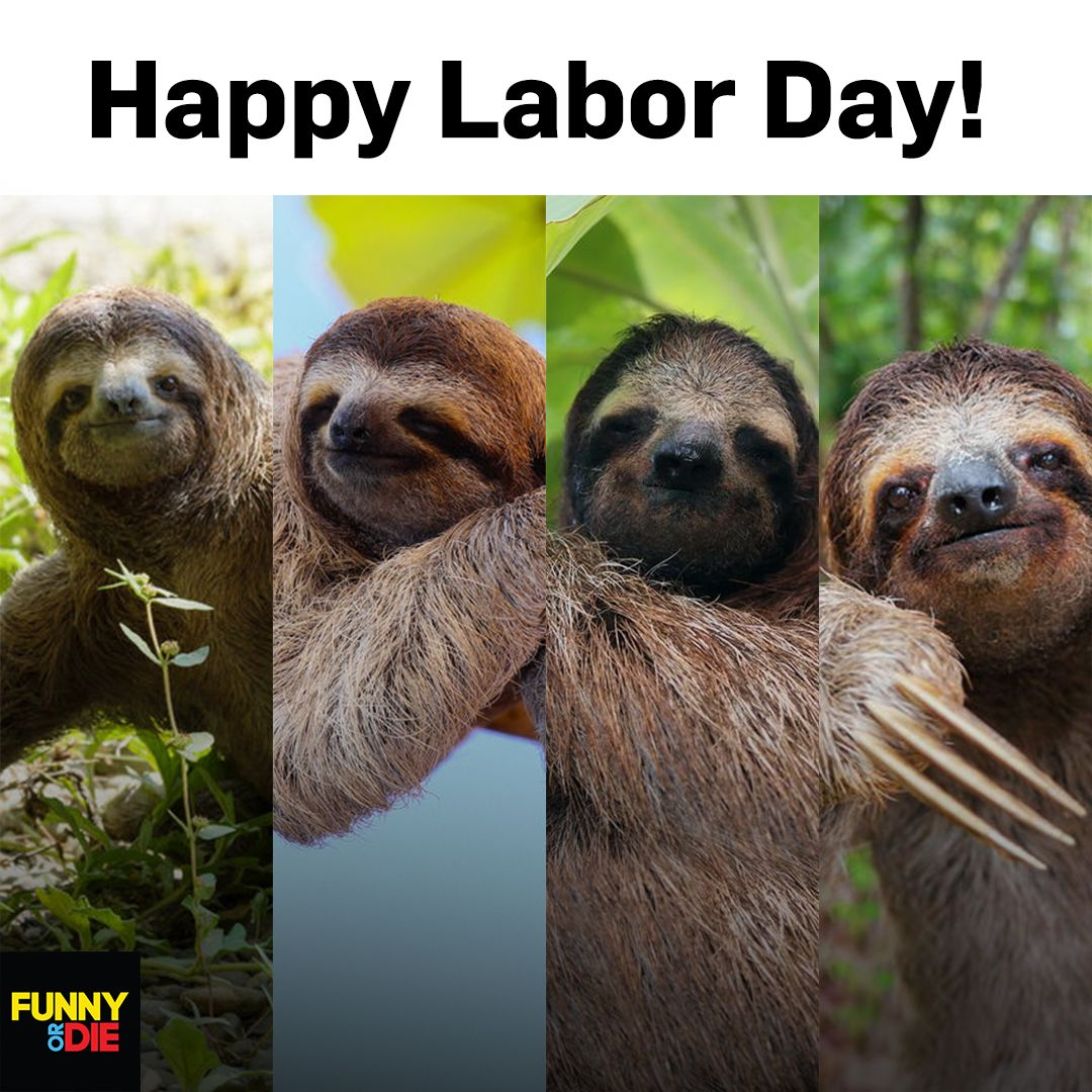 Every day is Labor Day when you're a sloth! Seriously ...