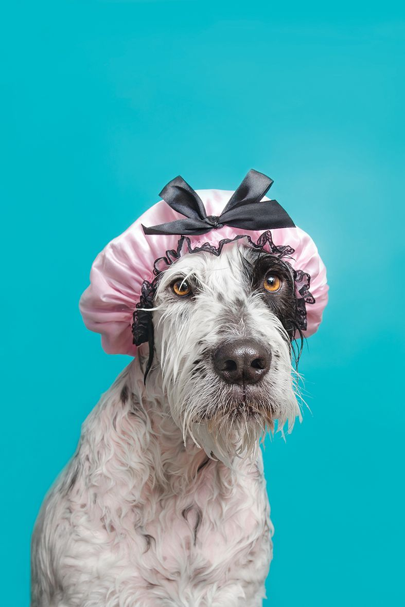 The Wet Dog Book In Stores Now The First Book By Sophiegamand A French Award Winning Photographer And Animal Advocate Li Dog Photograph Cute Dogs Dog Photos