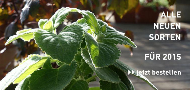 rühlemann's kräuter und duftpflanzen | kräuter in topf und garten, Terrassen ideen