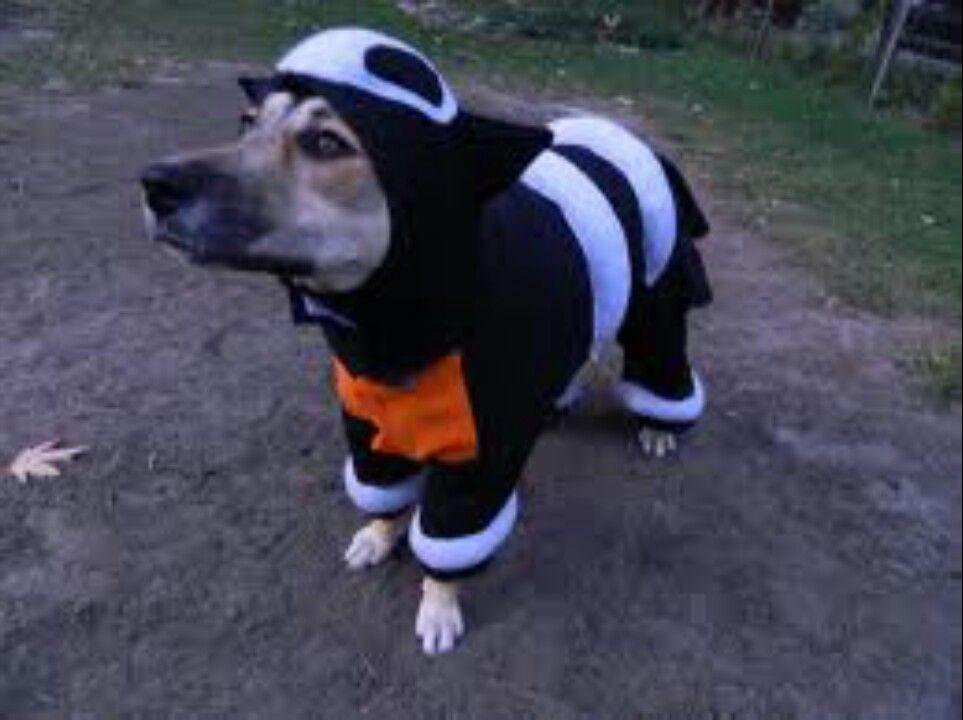 Houndour Pet Costume Best Dog Costumes Dog Pokemon Halloween