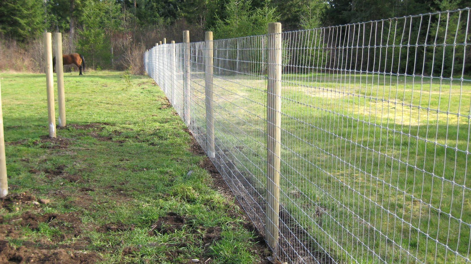 Lucky S Diet Is Going Well Cheap Fence Fence Landscaping Backyard Fences