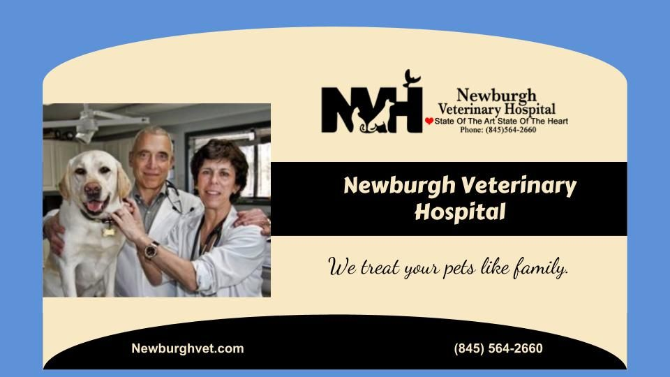 Newburgh Animal Hospital Is Your Local Veterinarian In Newburgh