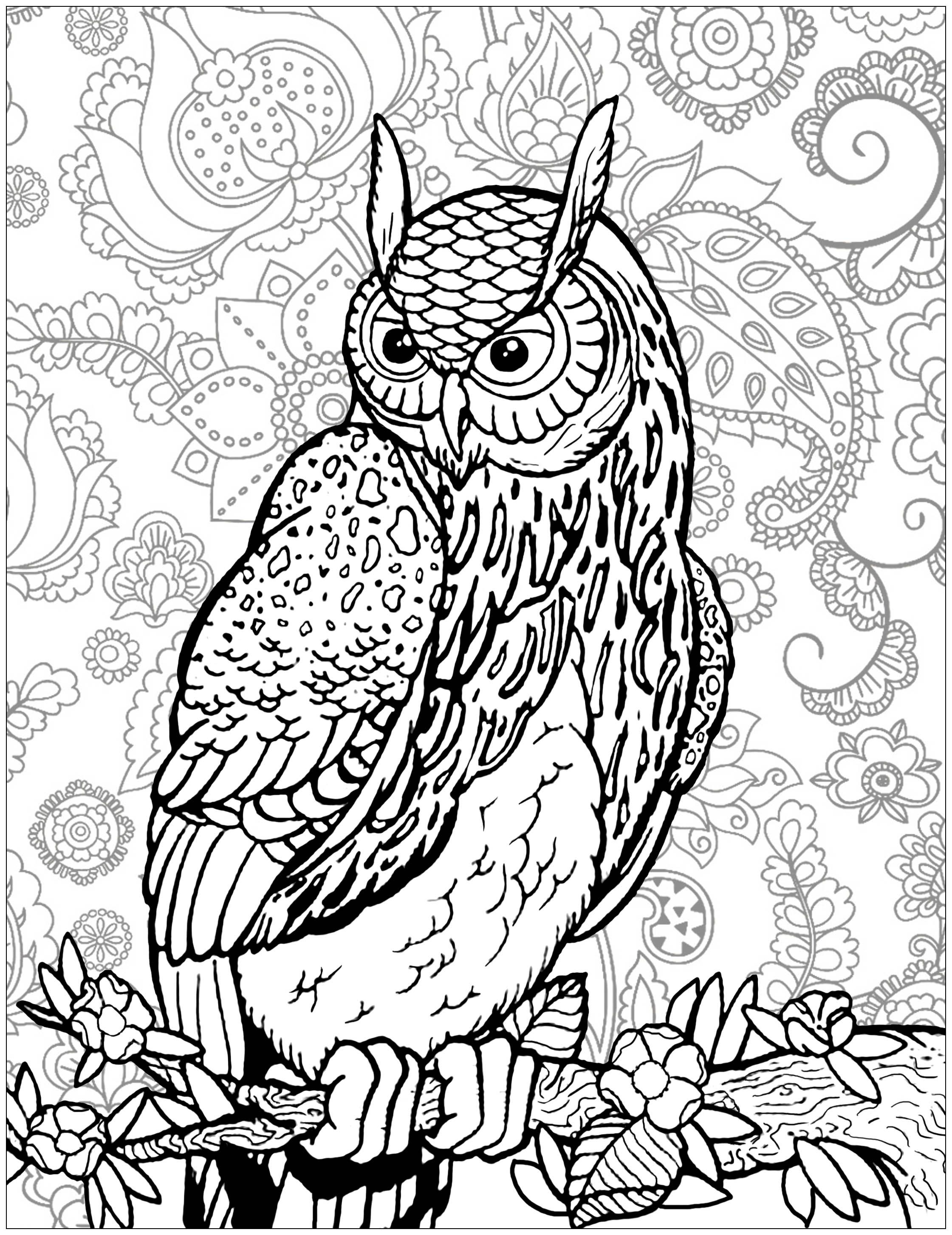 Owl On Tree Branch Background Owl On A Tree Branch With Complex