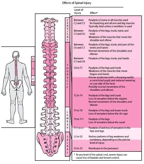 Image Result For Spinal Cord Injury Nursing Cheat Sheets