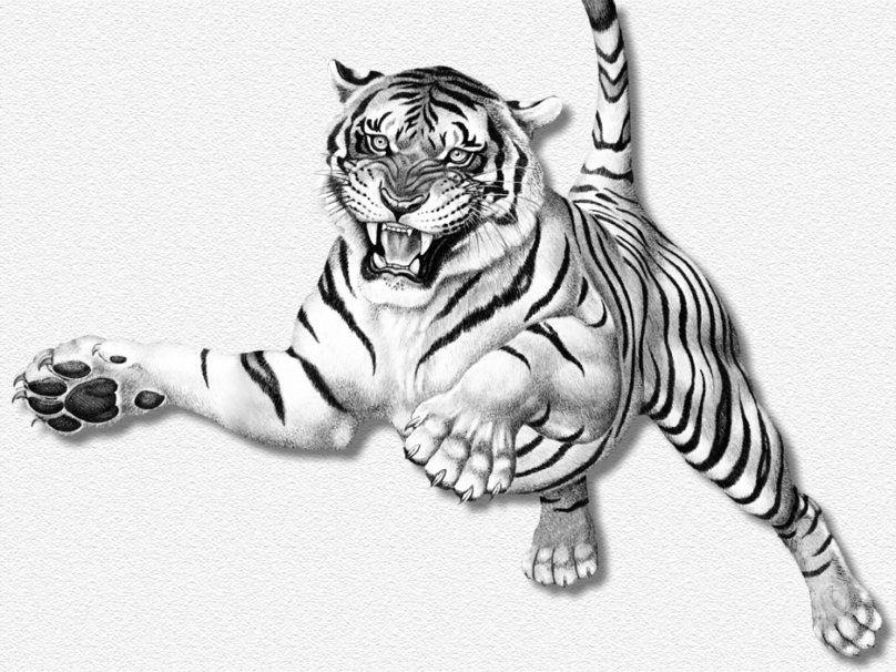 Salto Della Tigre Bianca File Vettoriale Tatuaggi Guerriero
