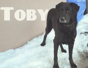 CANADA Say hello to Toby! This handsome guy is a 7yr