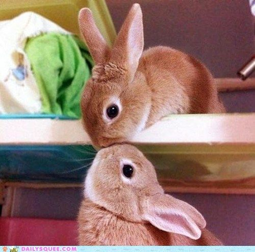 For you jenny Vertical Bunny Kiss  @Paola Torres omg!! love it! bunny kiss!!!