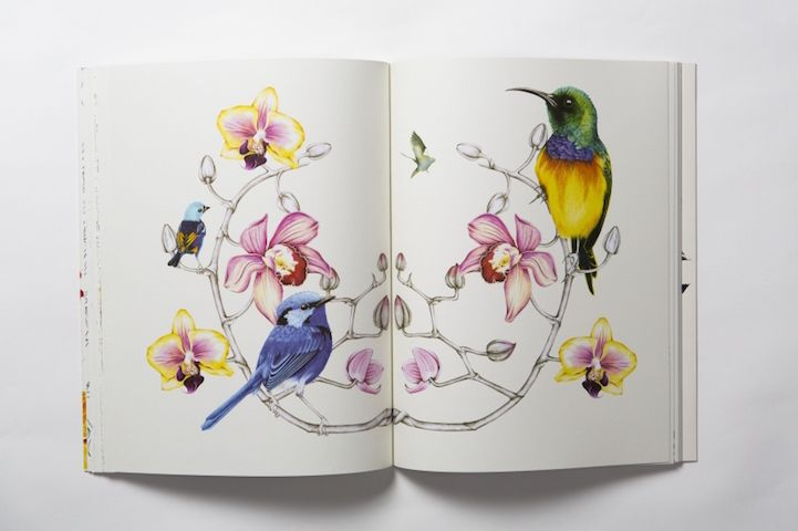 Birdtopia A Beautiful Colouring Book For All Ages By Daisy Fletcher Designwrld Coloring Books Flower Illustration Pen Illustration