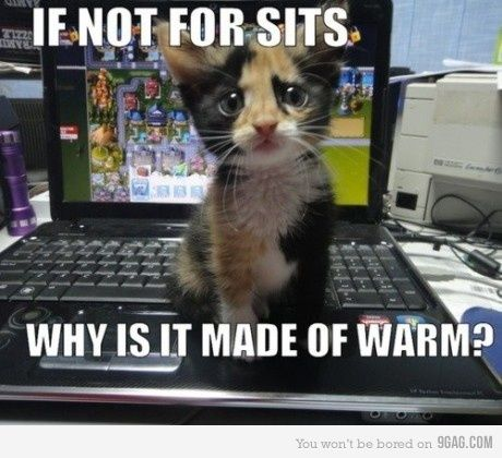 haha too cute not to pin! @Erin Zuccato, mimi ALWAYS sits in my laptop!!