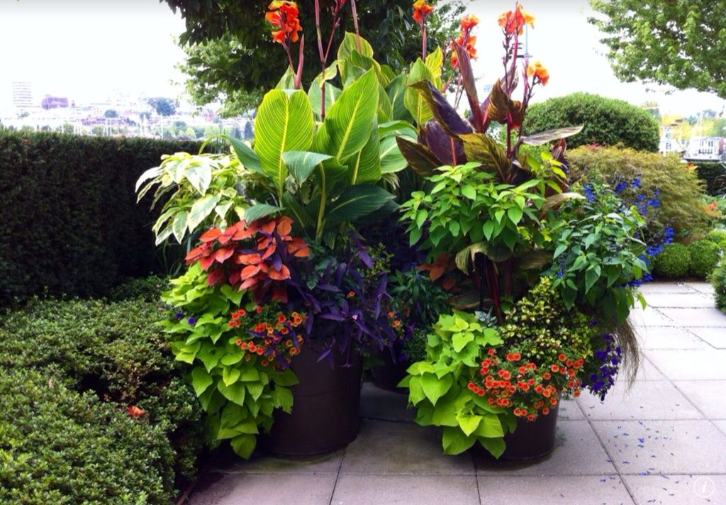 Tropical landscape yard with red futurity canna lily for Tropical plants landscaping ideas