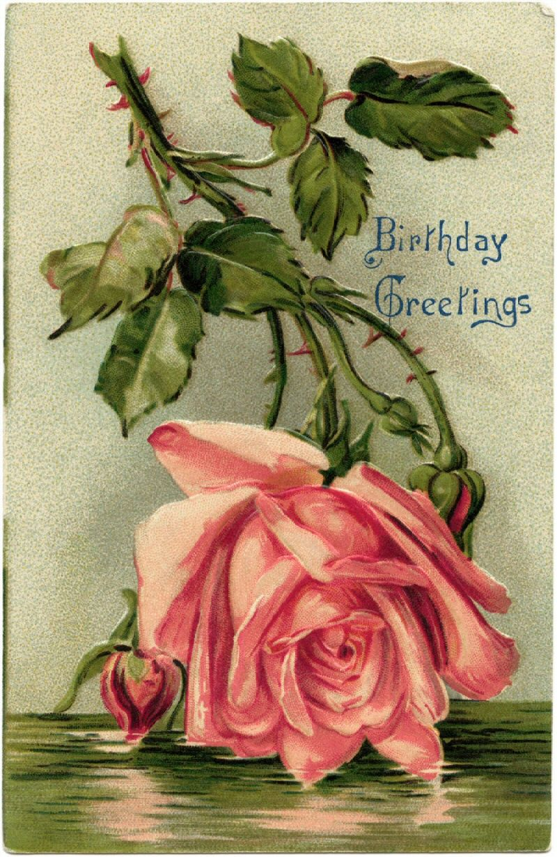 Pink Rose Birthday Greetings Post Card Fromolddesignshop Ephemera